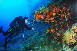 Ζήστε την εμπειρία της κατάδυσης στη Σύρο! | Experience scuba Diving in Syros!