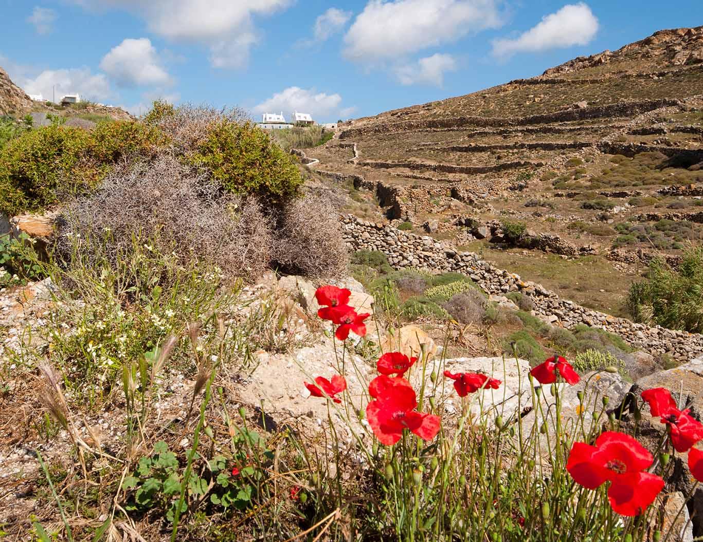 Ano Mera village, Mykonos2