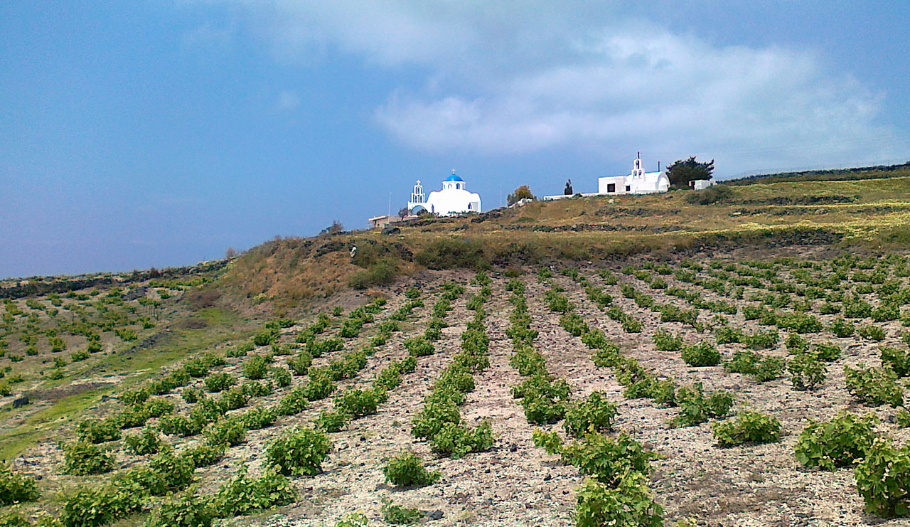 Image result for santorini wineries
