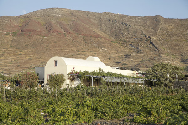 more-greece-santorini-wine-sigalas